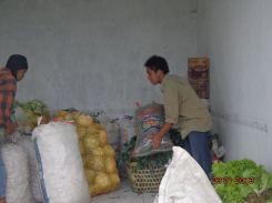 Petani sedang mengumpulkan sayur yang akan disumbangkan ke korban Banjir Jakarta